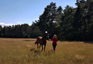 Annette Strohdiek mit Senner Pferd Foto privat