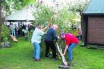 lippe aktuell maibaum 2012